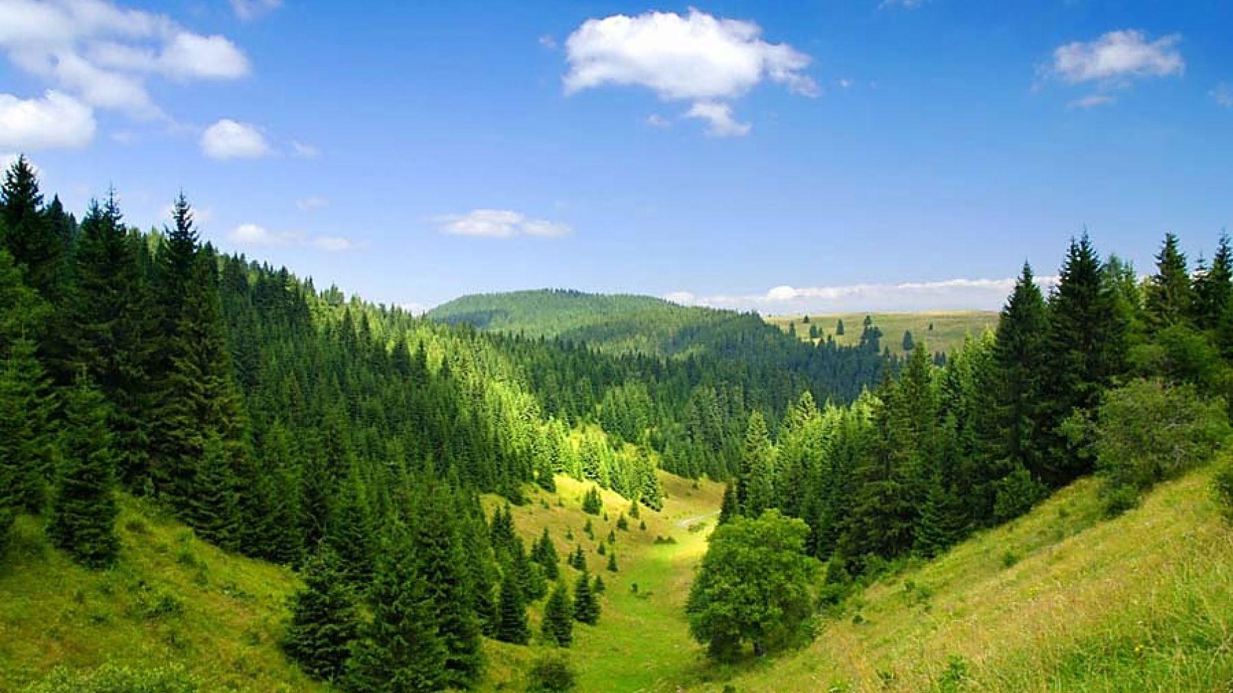 Nariadenie EP a Rady EÚ č. 995/2010 o uvádzanie dreva a výrobkov z dreva na trh